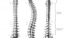 pochemy-poayvilas-bol-v-spine