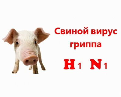 Опасный свиной вирус гриппа