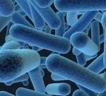 virtualnay-bakteriay