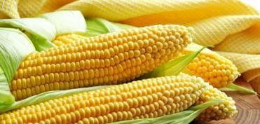 кукуруза калорийность