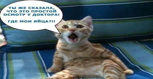 коты приколы