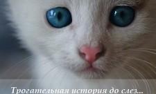 песни про кошек